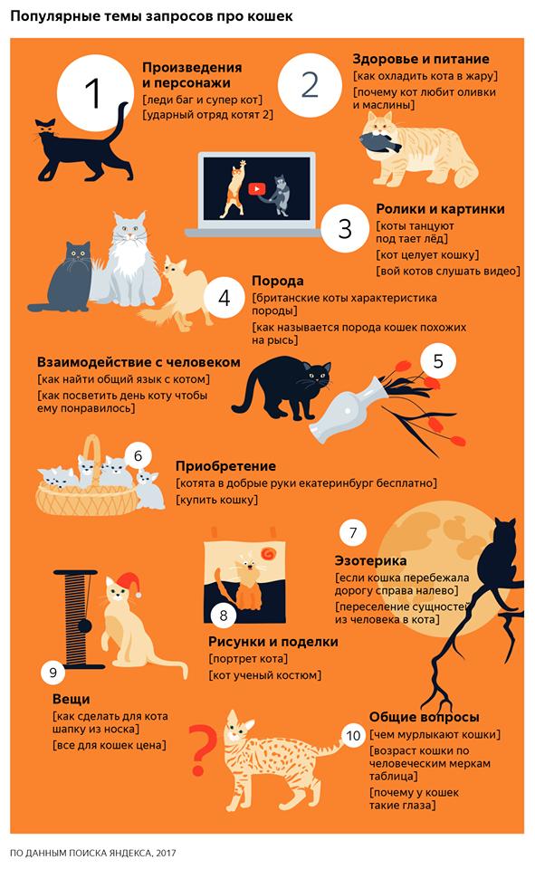 «Как охладить кота в жару»: «Яндекс» изучил запросы  о животных. Изображение № 1.
